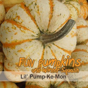 lil pump ke mon pumpkin seeds uses winter squash types