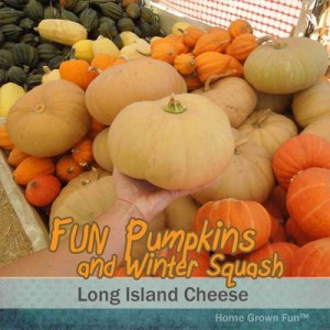 long island cheese pumpkin seeds uses winter squash types