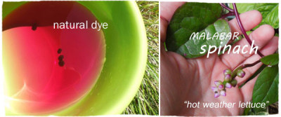Malabar Spinach Dye