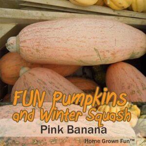 pink banana long squash