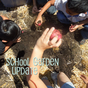 school garden update may 2013