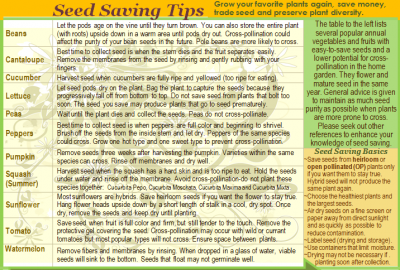 how to save seeds for beginners
