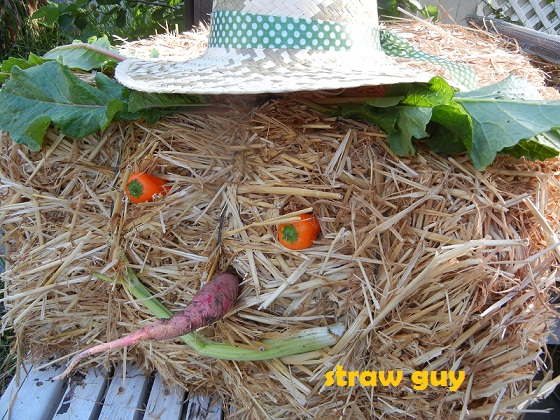 Uses for straw and using straw for mulch in the garden