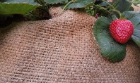 How to Plant Edibles in Burlap Sacks