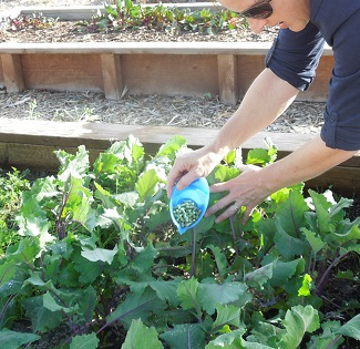 Alfalfa Pellets Fertilizer How To Use Alfalfa Pellets In