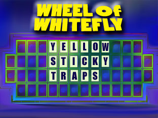 wheel-of-whitefly-answer-small