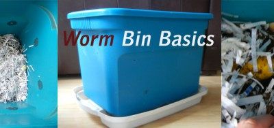How To Compost with Worms and Solve Common Problems VIDEO